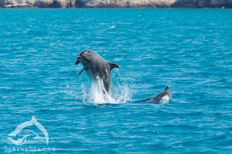 Морские животные очень красивые и грациозные. Фото: ЦИСРММ «Безмятежное Море» | Serene Sea/VK