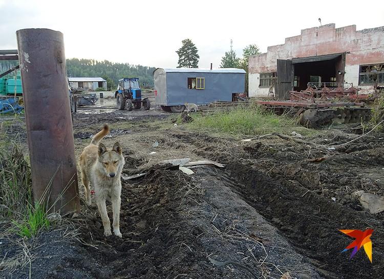 Посреди перевернутых стихией комбайнов и тракторов Тулунского агротехникума бродят брошенные собаки