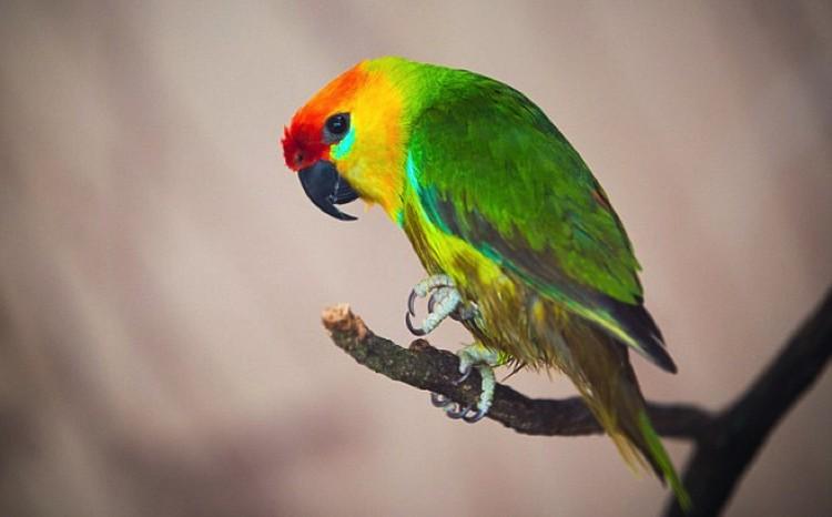 В древности тропическим птицам и в Сибири было уютно.