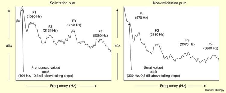 Справа - обычное мурлыканье, слева - с добавлением требовательных ноток высокой частоты.