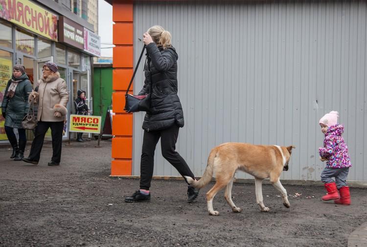Бродячие собаки даже своим видом могут напугать маленького ребенка.