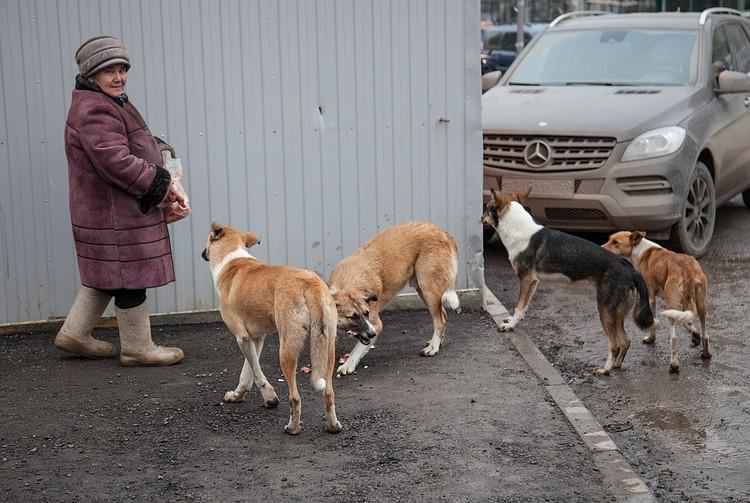 Сердобольные горожане прикармливают одичавших псов.