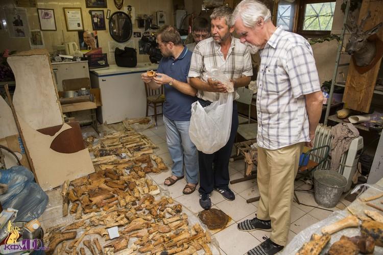 В Тавриде найдены останки древних животных. Фото: пресс-служба КФУ