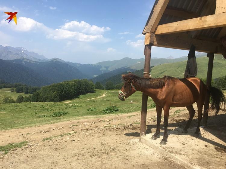 Последний сравнительно доступный перевал. Дальше страшная дорогу в Псху. Это лошадку держат специально для туристов