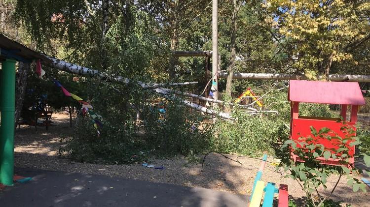 Деревья падали на территории детских садов Фото: администрация Краснодара