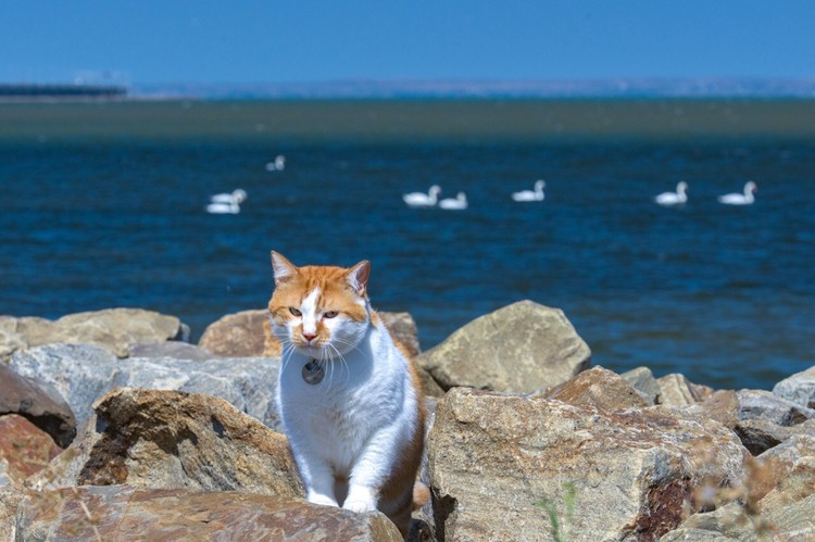 У Мостика нет конкурентов по красоте и значимости. Фото: кот Моста/VK