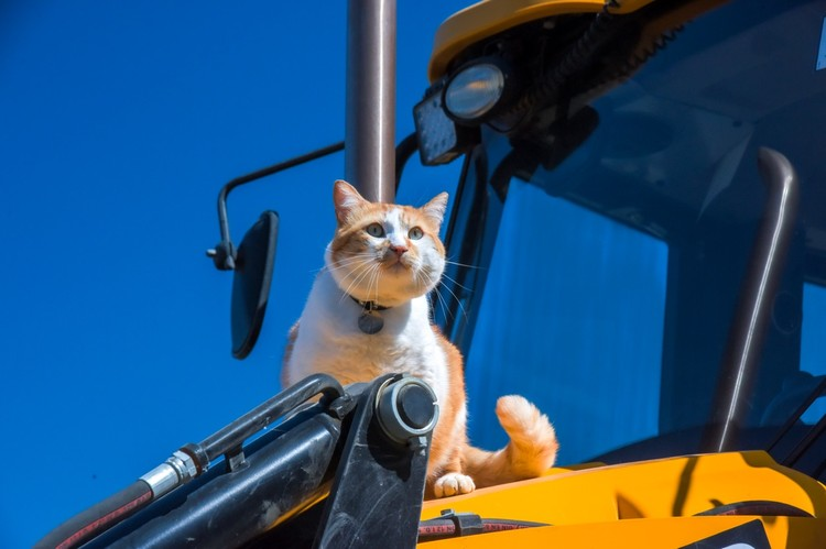 На тракторе сидеть теплее. Фото: кот Моста/VK
