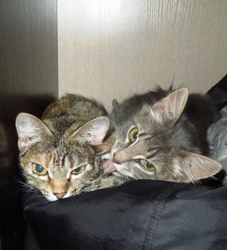 Кроме Лунти у Обрывковых живут мопс Сашка и еще одна кошка Ева (на фото справа).