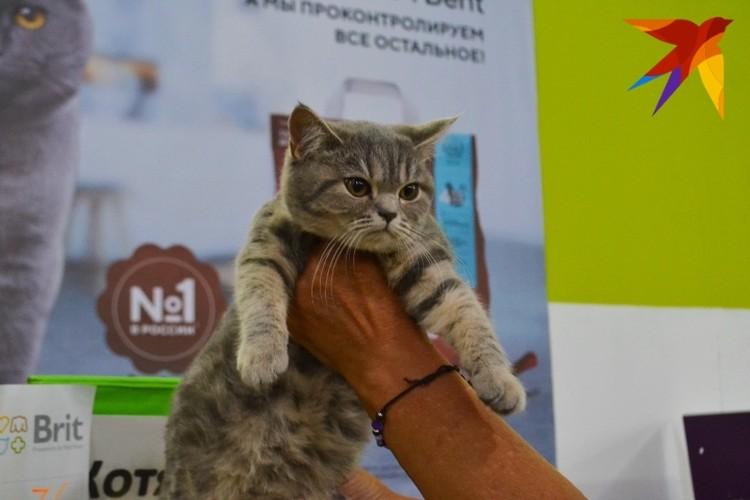 Фото с фестиваля любителей кошек и собак «ОктоберКот».