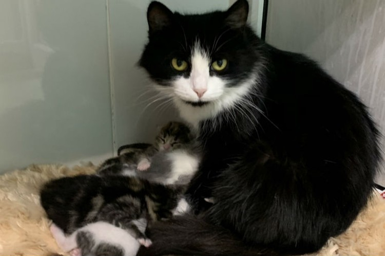 Кошке с котятами ищут новый дом и любящих хозяев.