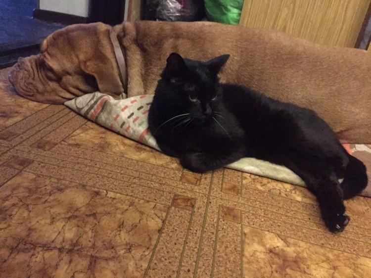 Глория и ее лучший друг, 19-летний кот, который недавно умер
