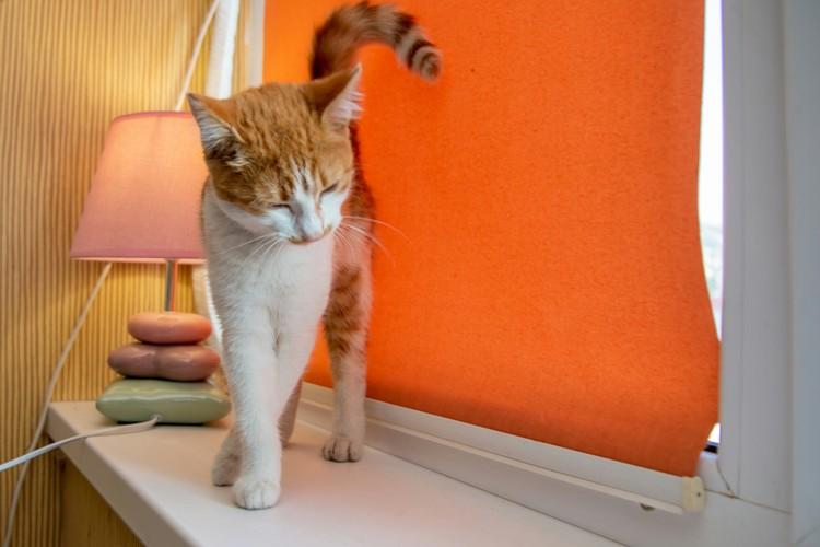 Кошка Зайка. Фото: vk.com/mjgkieserdca