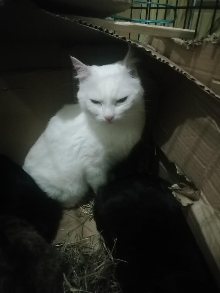Кошки были довольно упитанные и чистые. Фото: Дай лапу