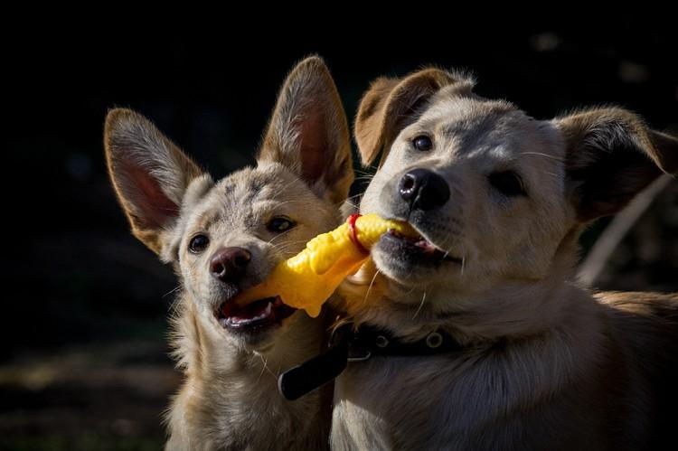 Дора и Дарина дружили и всегда держались рядом. Фото: приют для животных «Кошкино лукошко».