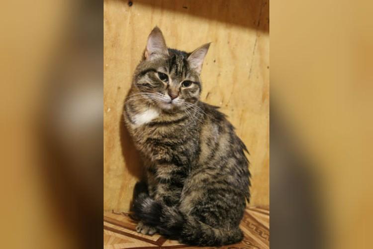 """Для малышки Флай ищут новый дом. Фото: """"Частный приют для кошек """"Томасина"""" в соцсетях."""