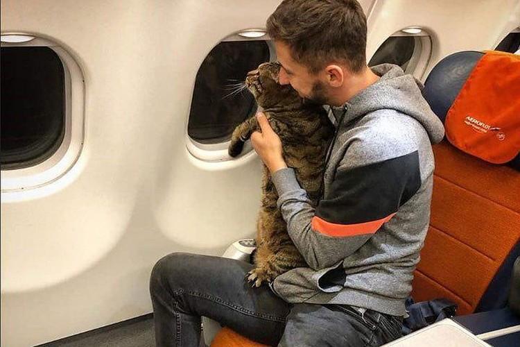 Забыв и профессора, и доцента, публика стала обсуждать казус с авиаперевозкой кота из Москвы во Владивосток