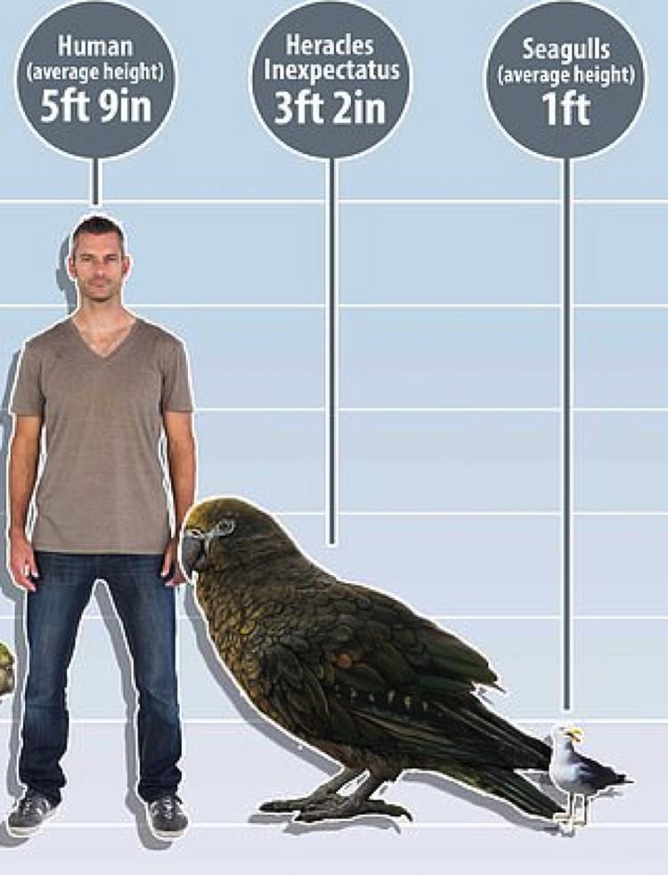 Доисторический попугай и в самом деле был огромен.