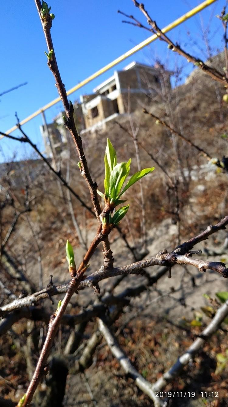 """У деревьев появились молодые листья. Фото: """"Черный список Симферополь""""/""""Вконтакте"""""""