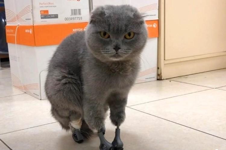 Дымка стала учиться ходить на протезах на следующий день после операции. ФОТО: из архива Сергея Горшкова.