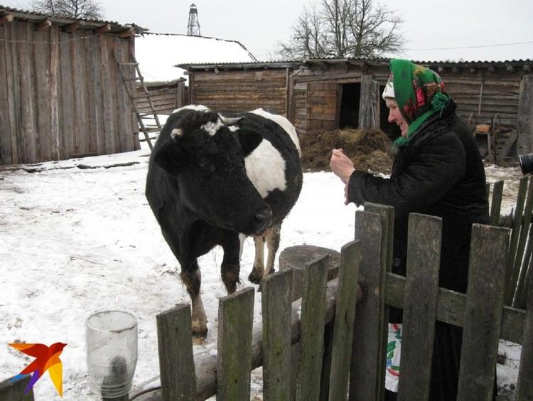 До сих пор живы обычаи обходить домашнюю скотину с грамничной свечой. Фото: Татьяна КУХАРОНАК