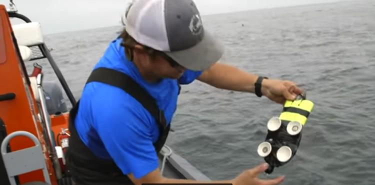 Так выглядели присоски, с помощью которых удалось следить за ЧСС кита почти 9 часов.