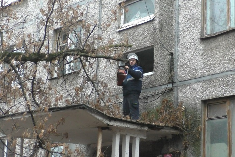 В выходные дерево рухнуло на козырек подъезда дома в Липецке
