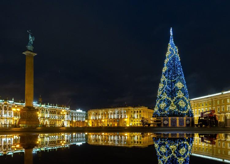 Ежегодно в Петербурге проводят акции по сбору отслуживших живых елок.