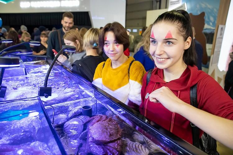 В Экспоцентре установили аквариум с дальневосточными обитателями моря - морскими ежами, звездами и крабами. Фото предоставлено пресс-службой правительства Сахалинской области.