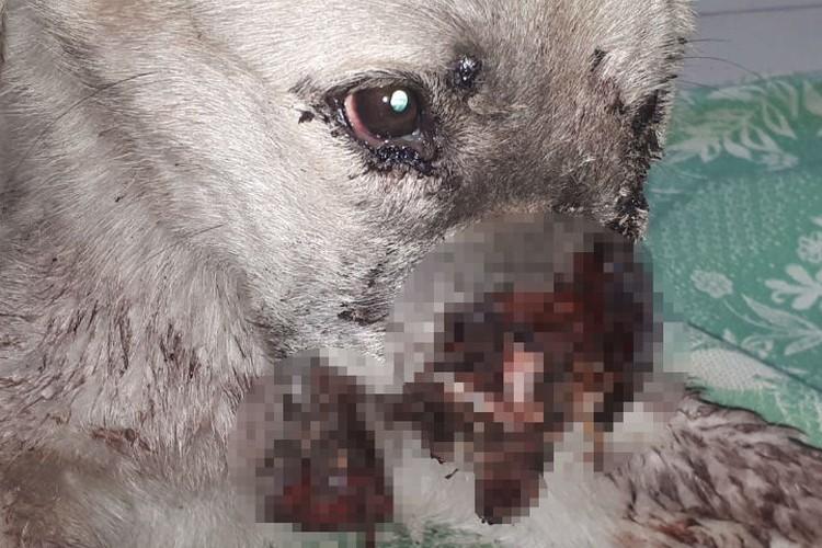 Так выглядела собака, когда ее нашли. Фото: предоставлено Ольгой Ташпулатовой.