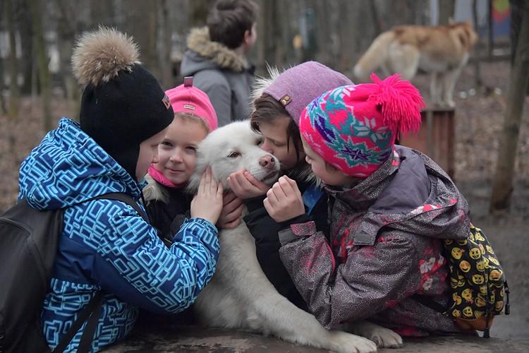 В столичном хаски-парке содержатся 20 собак