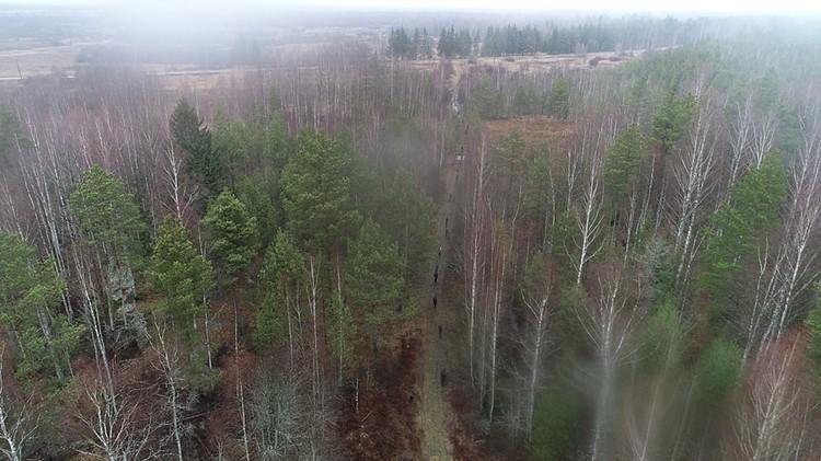Лес делили на квадраты, и каждый поисковик шел строго по своему направлению