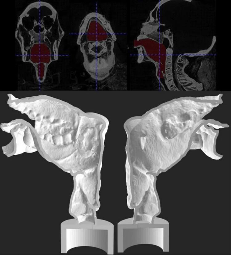 Сканирование голосового тракта жреца позволило создать его трехмерную модель.