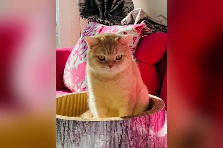 Домой котик вернется вместе с хозяином. Фото: предоставлено героем публикации.