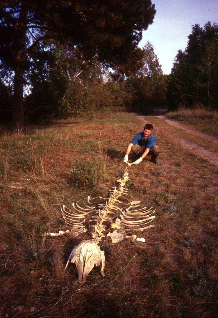 Сушка белухи. Фото из архива Павла Ситникова