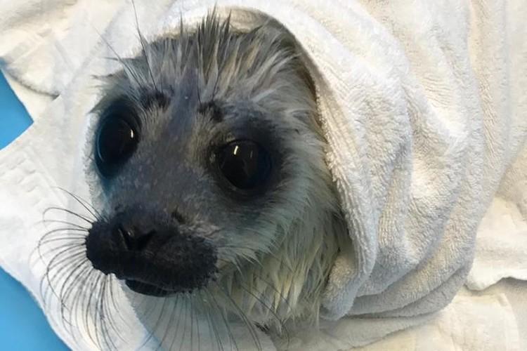 А холодная вода малышке не нравится, мерзнет / Фото: Водоканал Петербурга