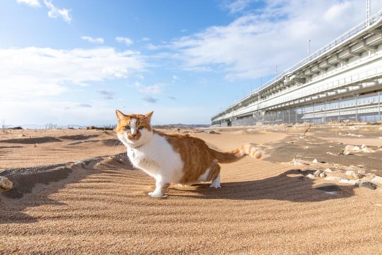 Кот отлично смотрится на фоне моста. Фото: кот Моста/VK