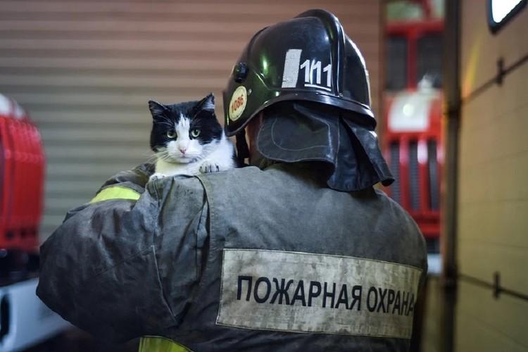 Гидрант живет с пожарными одной большой семьей.