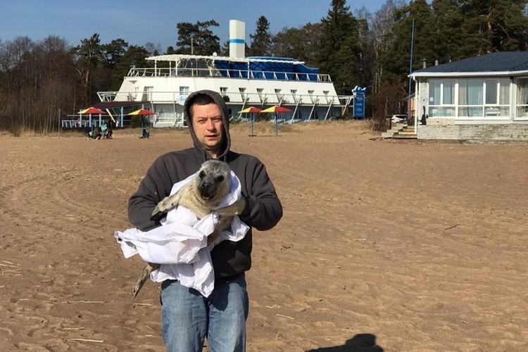"""Еще одного нового постояльца зоозащитники нашли на пляже в Комарово. Фото: """"Фонд друзей балтийской нерпы"""""""