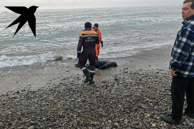 Тело погибшего вынесло на берег. Фото: предоставлено очевидцами.
