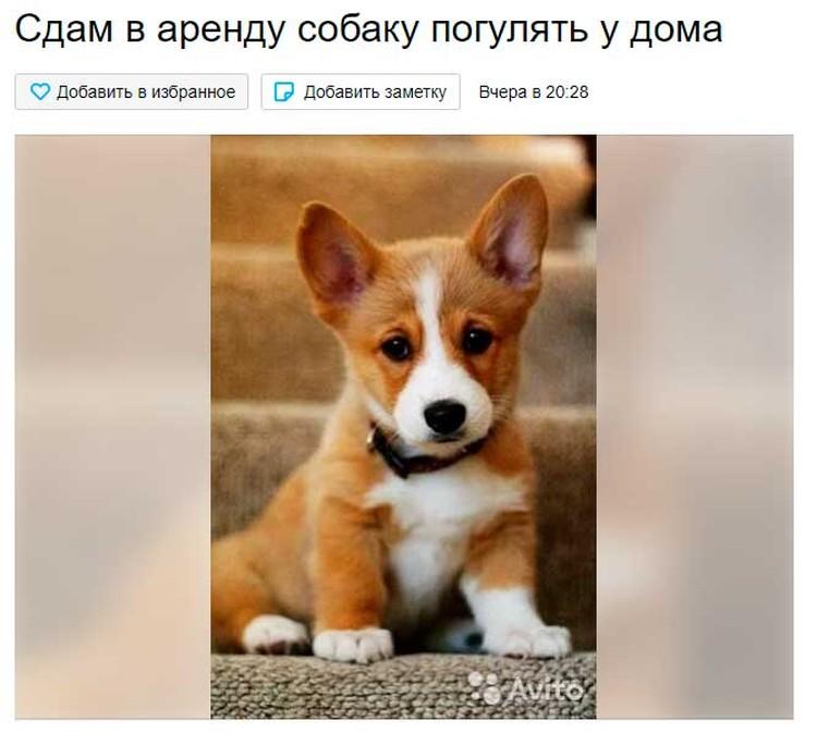 Аренда собак.