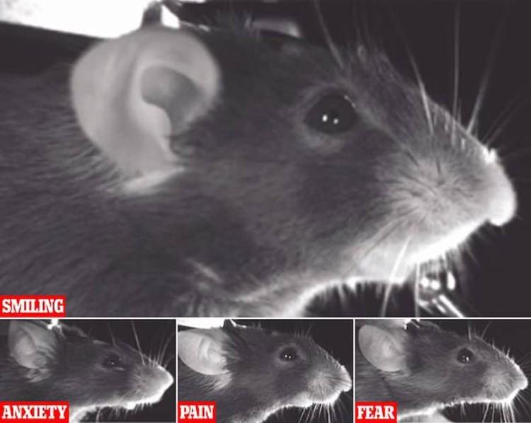 Разбираться в мимике мышей надо для того, чтобы понимать природу человеческих эмоций.