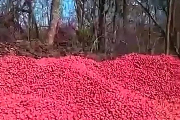 Кубанские фермеры выбросили урожай редиса