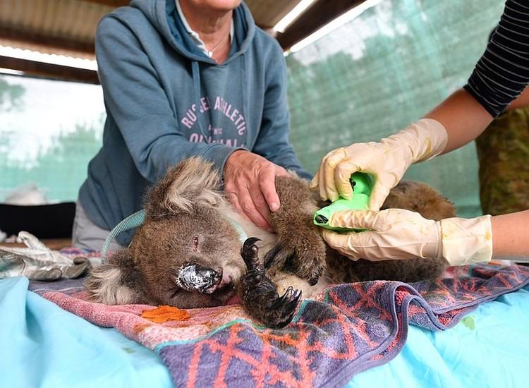 Животных австралийцы спасали всей страной.