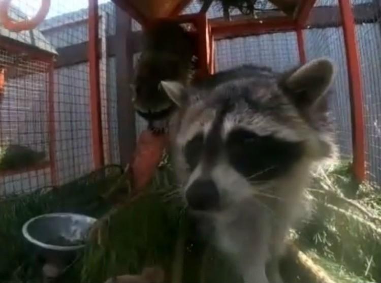 Никто из особей после непогоды не заболел. Фото предоставлено Сибирским зоопарком.