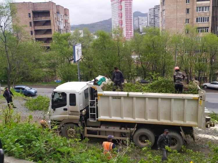Срубленные деревья вывозят с территории