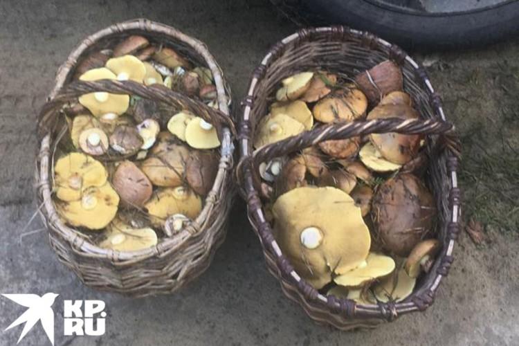 С середины мая появились грибы, которые обычно можно встретить только летом и осенью. Фото: Владимир Порываев