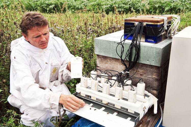 В Германии исследования показали значительное снижение биомассы летающих насекомых.