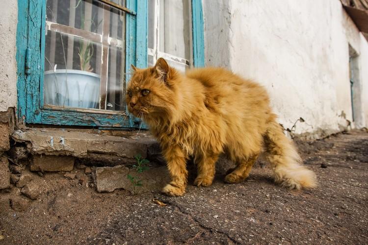 Самара котическая