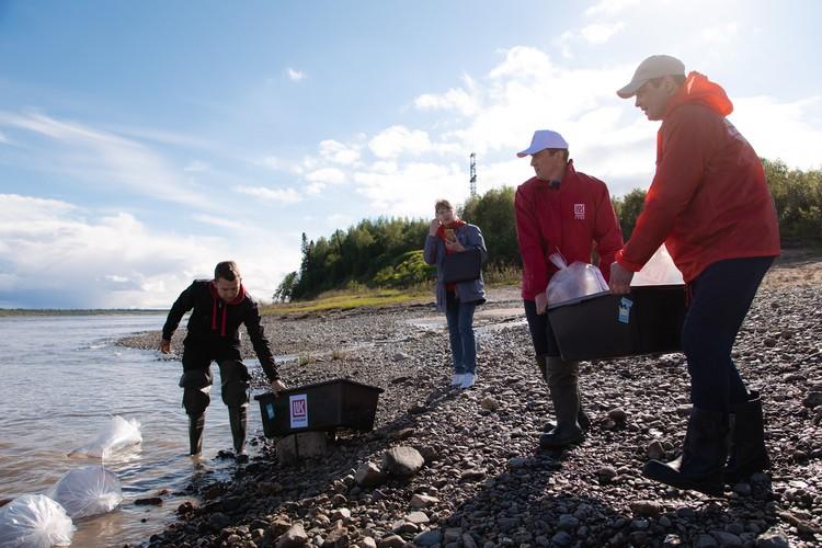 Этим летом нефтяники ЛУКОЙЛ-Коми также планируют выпустить в северные реки молодь стерляди