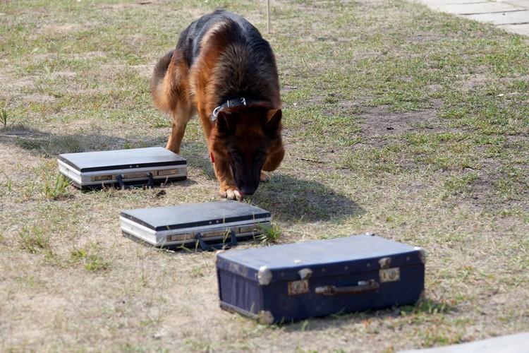 Главное оружие собак - острый нюх. Фото: ГУФСИН России по Челябинской области